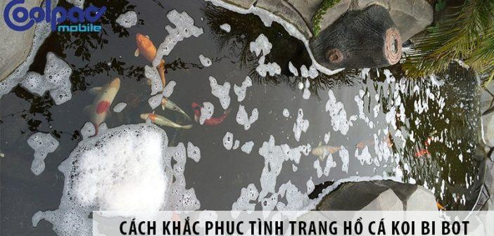 3 cách khắc phục tình trạng hồ cá Koi bị bọt hiệu quả