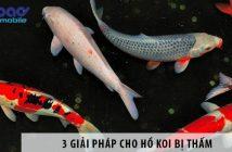 3 giải pháp cho hồ Koi bị thấm: Ưu và nhược điểm